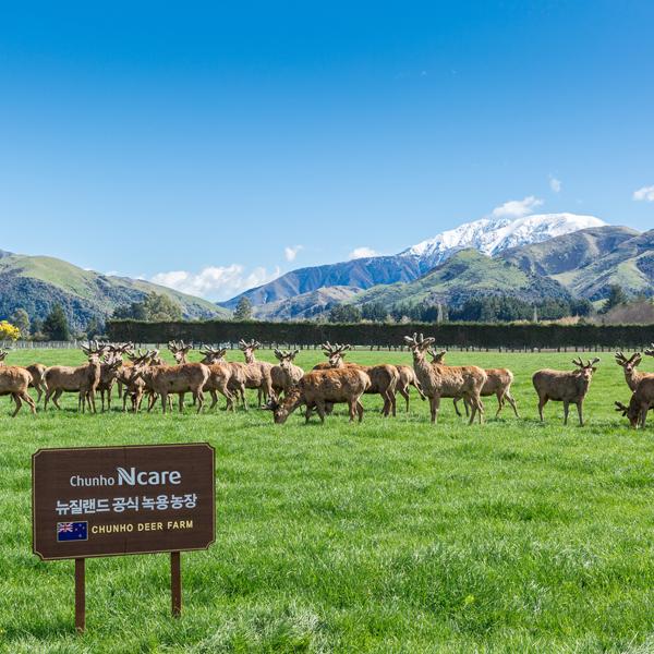 チョンホニュージーランド鹿農場